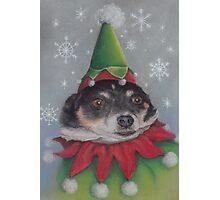 A Furry Christmas Elf Photographic Print