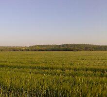 Nice Field by Waine Lasikiewicz