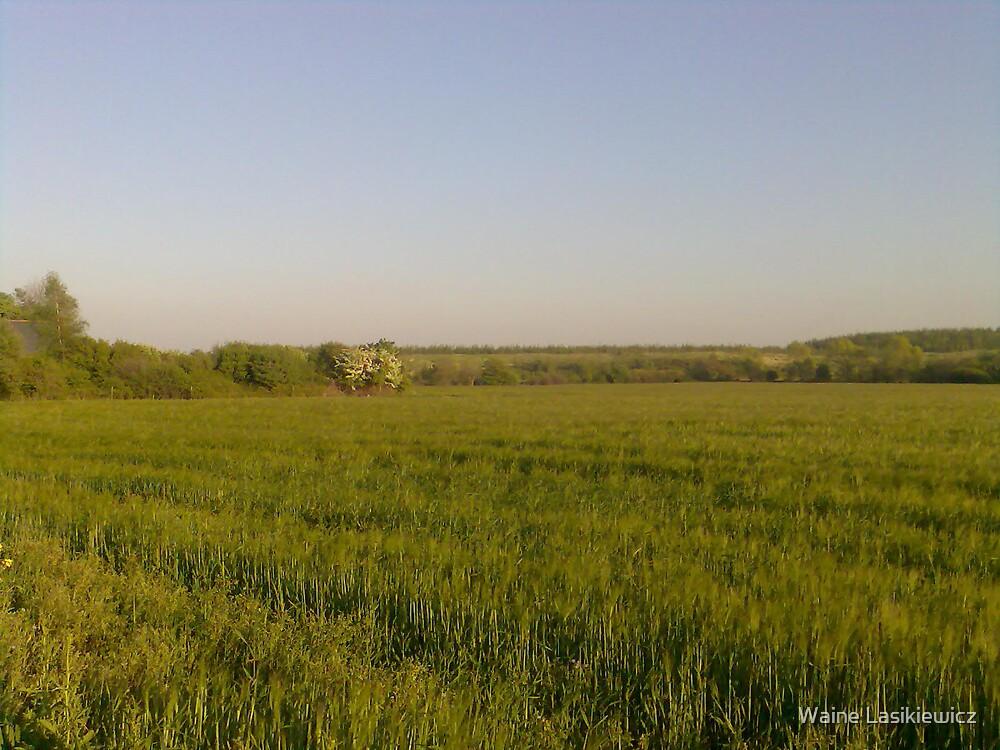 Another Field Shot by Waine Lasikiewicz