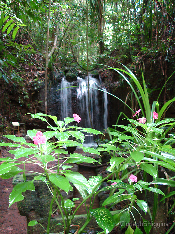 Flowers & Waterfall at Paronella Park Queensland by ClodaghSHiggins