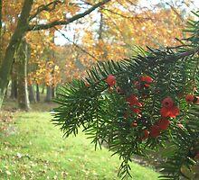 Yew and Autumn Colour by Edward Gunn