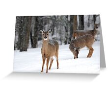 Winter White Tail Greeting Card