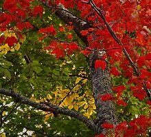 Red yellow green by BrigitteC