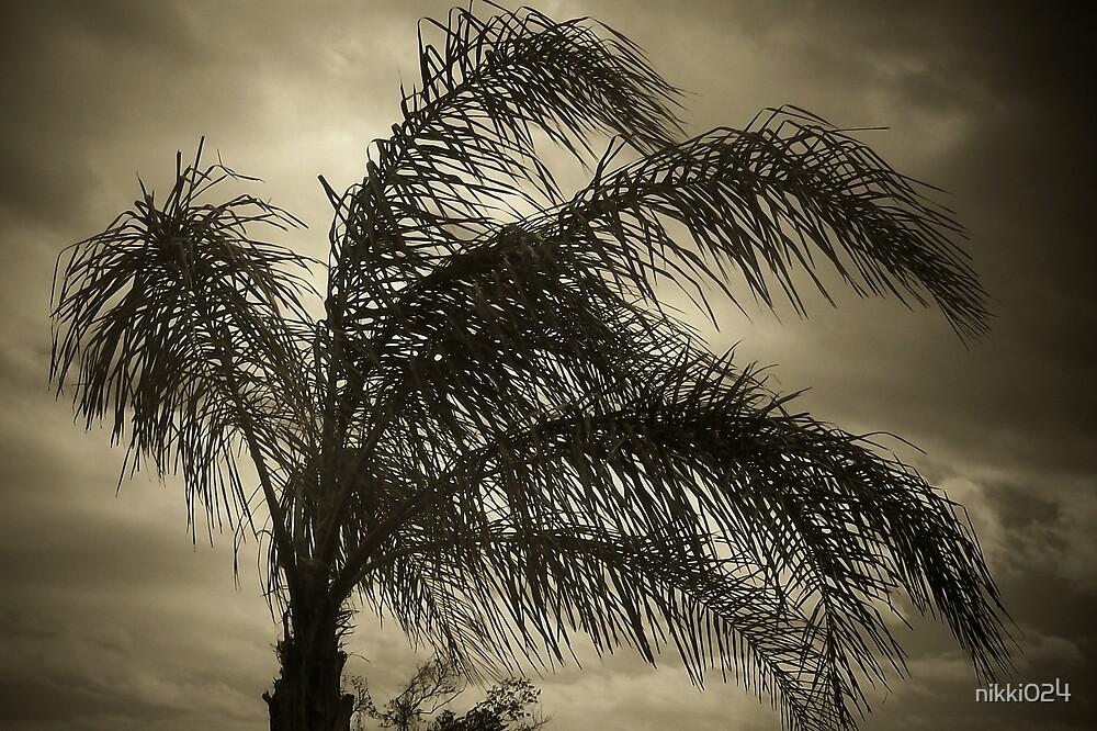 the palm tree bw by nikki024
