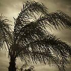 the palm tree bw by nikki024