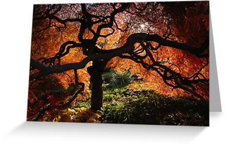 Old Acer Dissectum Bronze by Robert Mullner