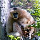 Mother and baby by indiafrank