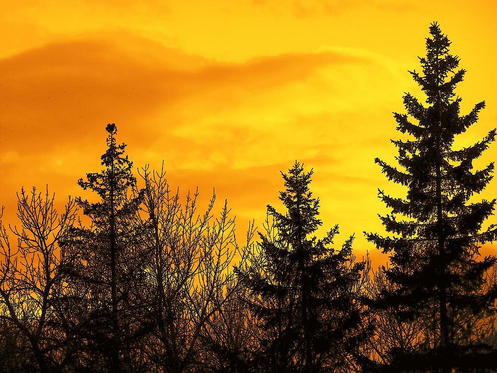 Sunset Gold by Gene Cyr