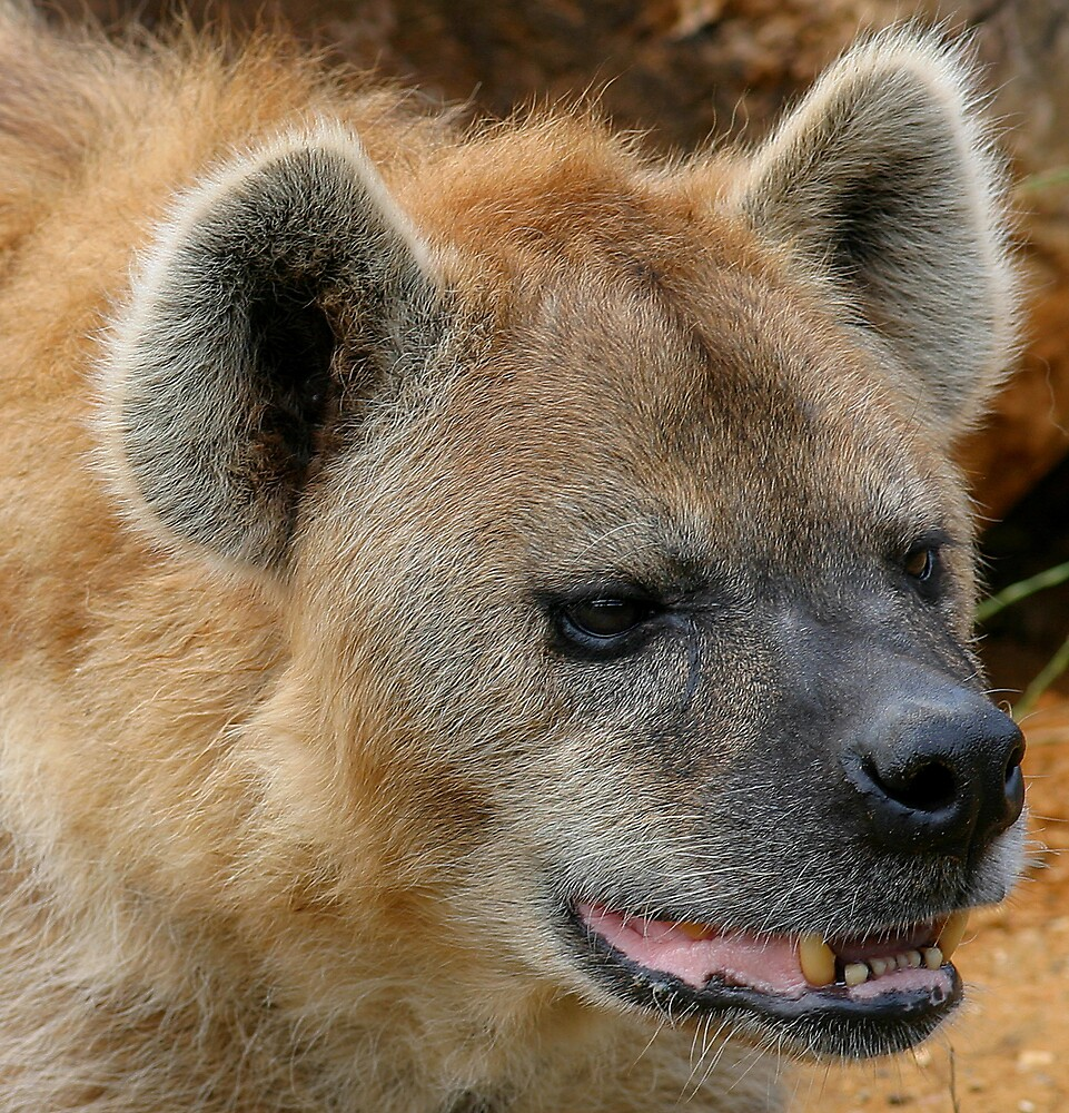 Bone Crunching Jaws of Hyena by kitlew