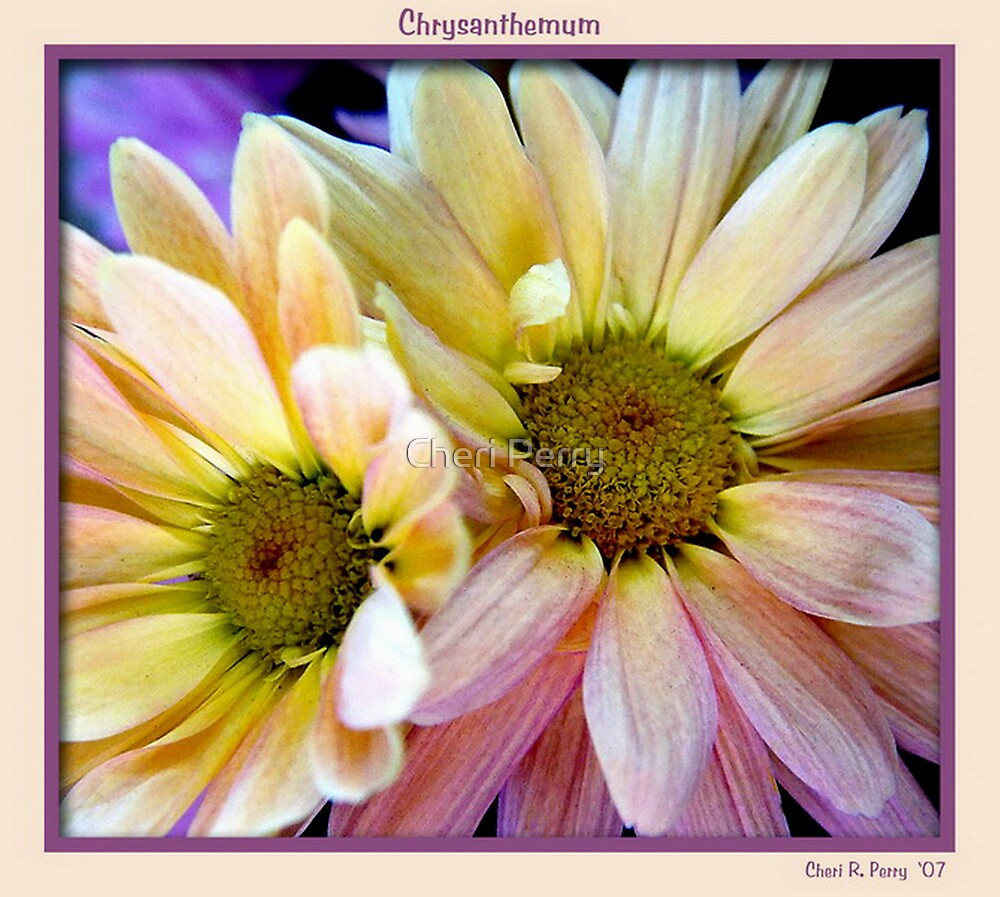 Chrysanthemum by Cheri Perry