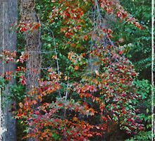 Autumn by Viki B