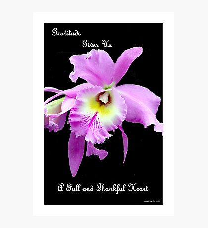 Gratitude Gives Us A Full And Thankfull Heart Photographic Print