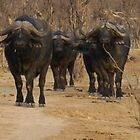Buffalos in the Bush by Sandra Kent