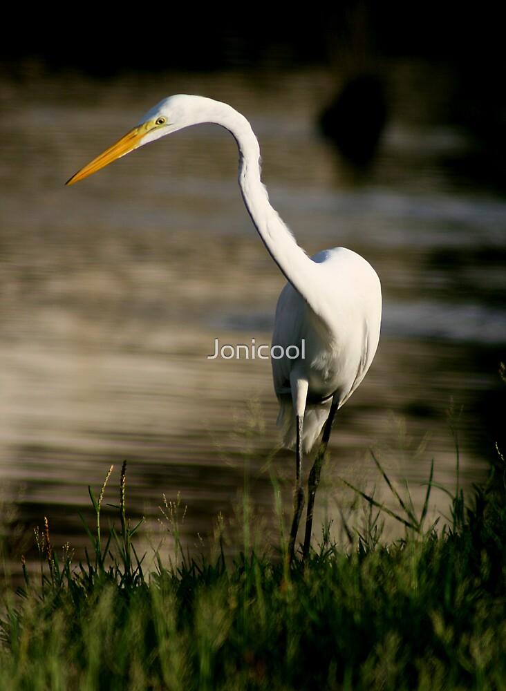 Great Egret by Jonicool