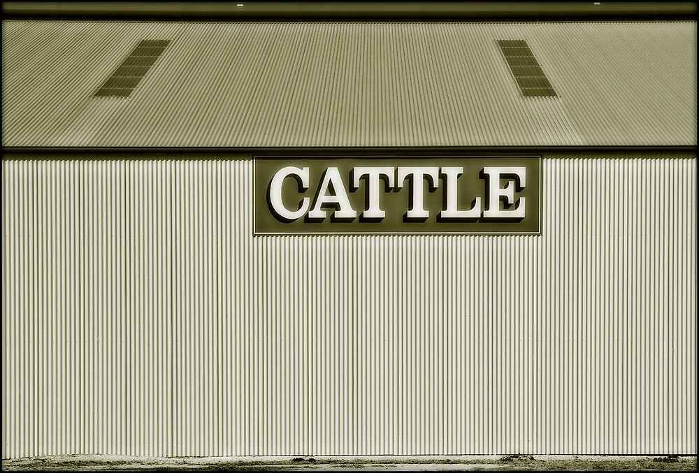 Cattle by Charles McKean