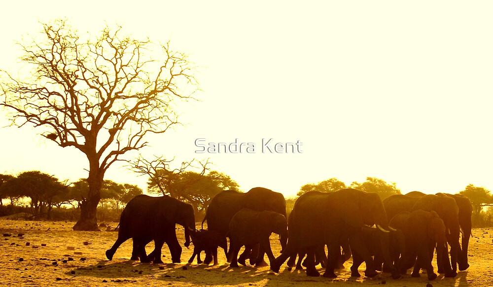 Elephants sun set by Sandra Kent