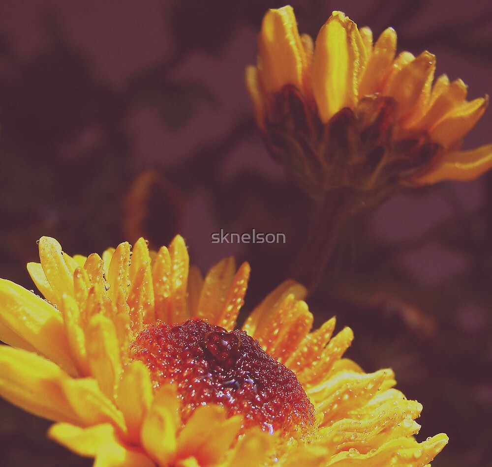 Double Delight by sknelson