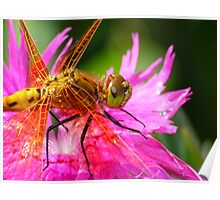 Dragonfly, Orange on Electric Pink Poster