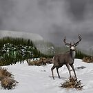 Snow Deer by Walter Colvin