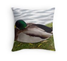 Malard Duck Throw Pillow