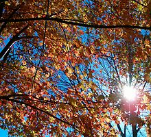 Autumn Sun by Crockpot