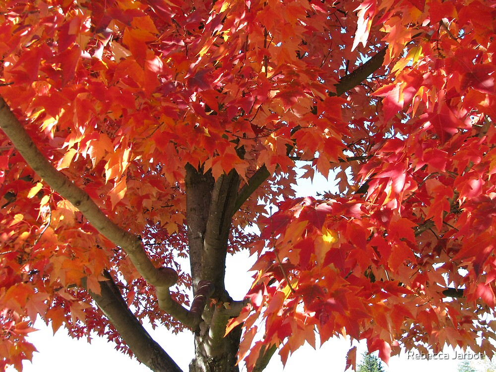Red Maple Tree by Rebecca Jarboe