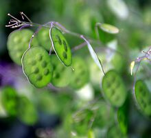 Green Pea by trek5200