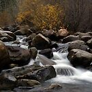 Carson River by Jill Doyle
