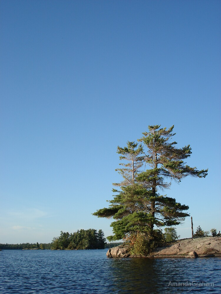 Lone Pine on the water by AmandaGraham
