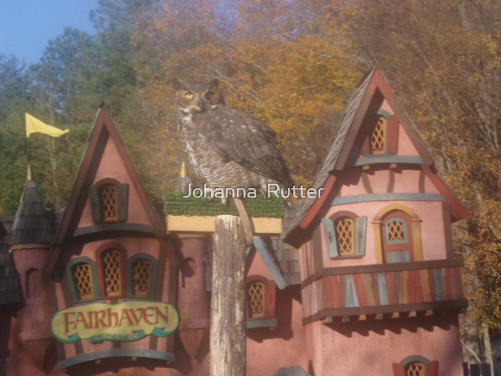 Fair Haven Owl by Johanna  Rutter