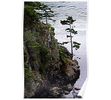 Deception Pass Tree Poster