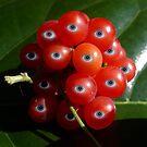 Eye Fruit by Elizabeth Burton