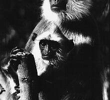 Hanuman Monkey and Young by kitlew
