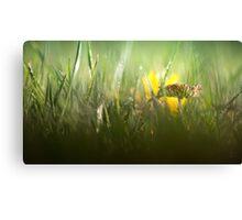 Splendour in the grass... Canvas Print
