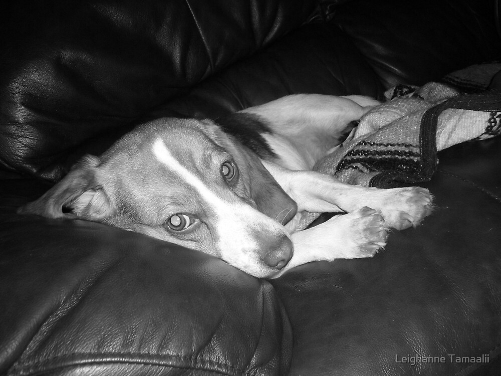 Black and White Dog 2 by Leighanne Tamaalii