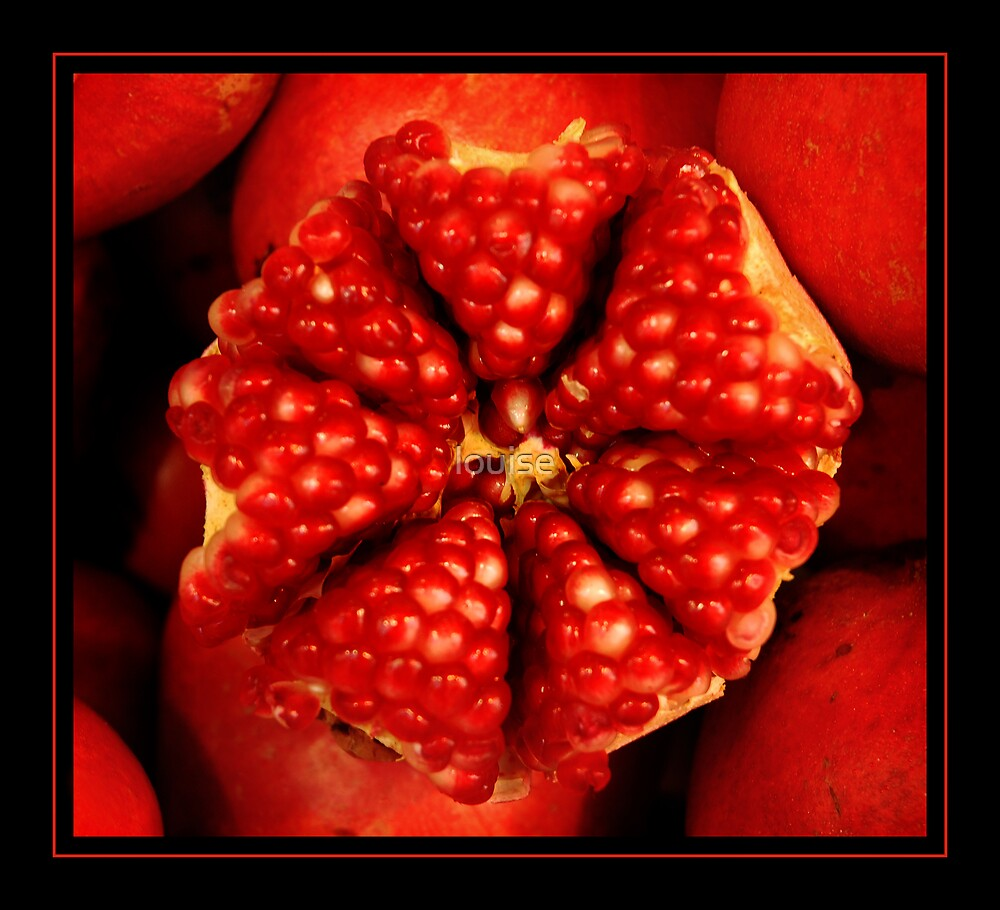 POMEGRANATE by louise