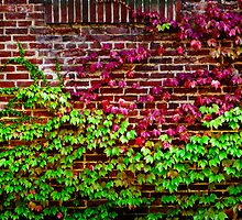 Ivy and brick by Paul Grinzi