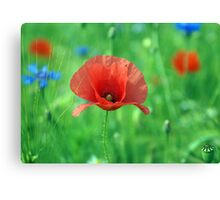 German Poppy Canvas Print