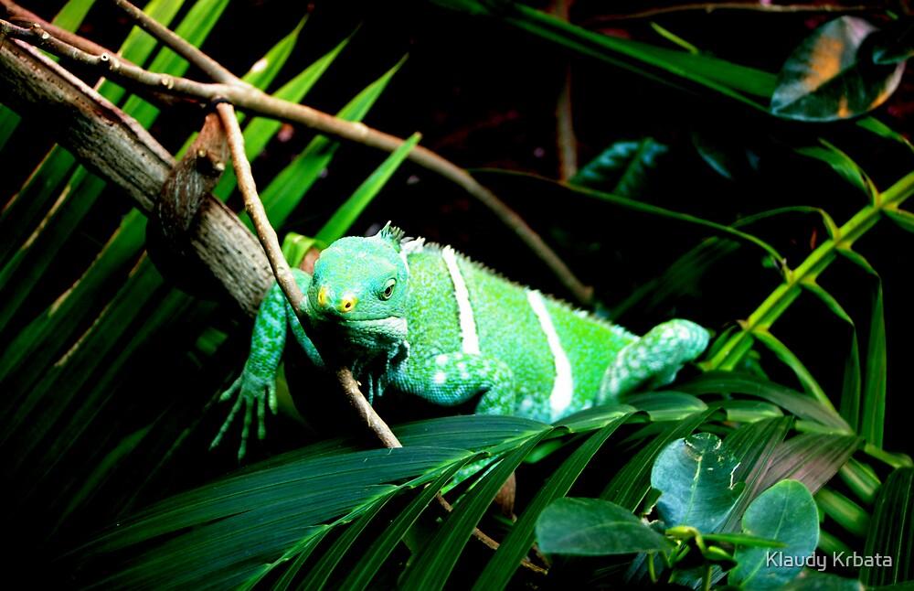 chameleon by Klaudy Krbata