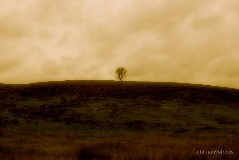 lonely tree by alternativefocus