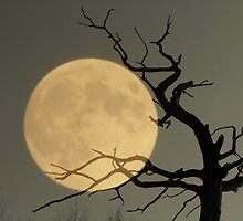 Spooky by NicoleBPhotos