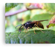 Autumn Wasp Canvas Print