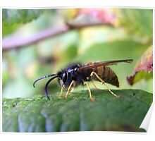 Autumn Wasp Poster
