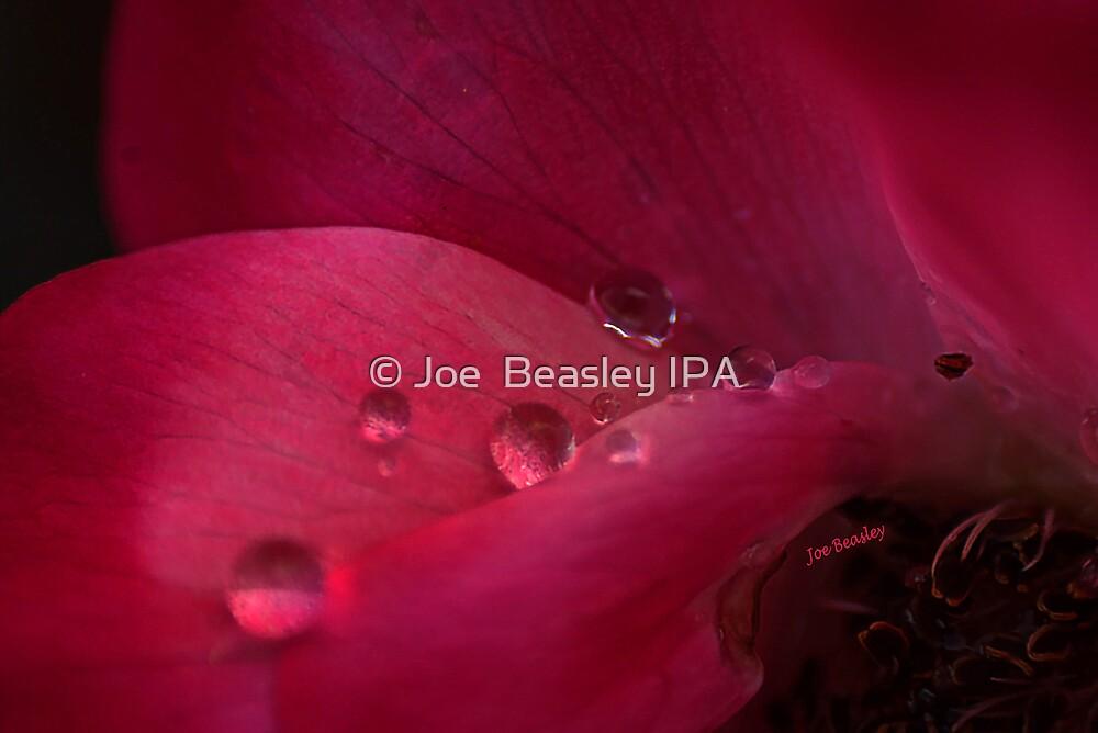 Rose Water by © Joe  Beasley IPA