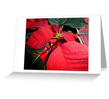 A Group Of Poinsettias Greeting Card