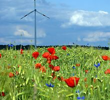 Windmill in Poppies by Phillip Moore
