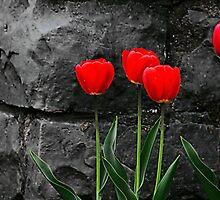 Five Tulips by zeebuzz
