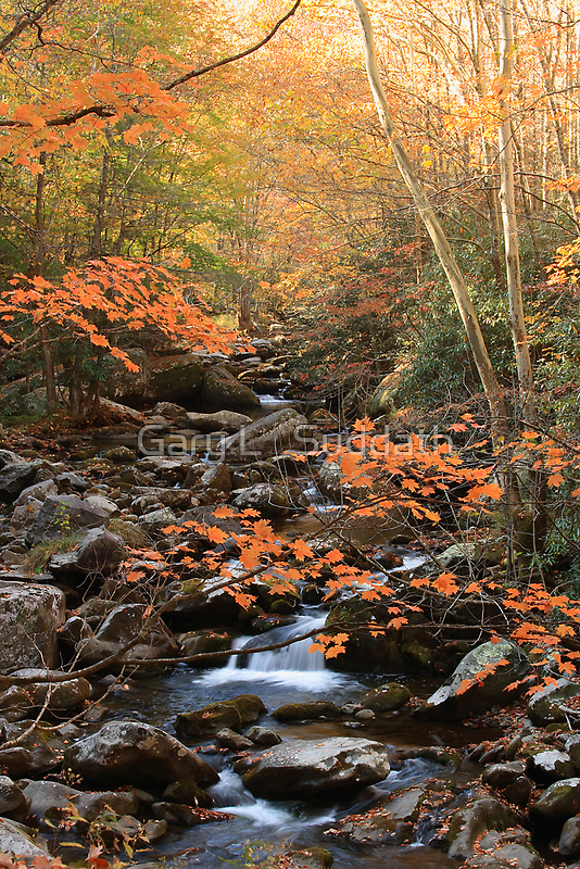 Nature's Splendor  by Gary L   Suddath