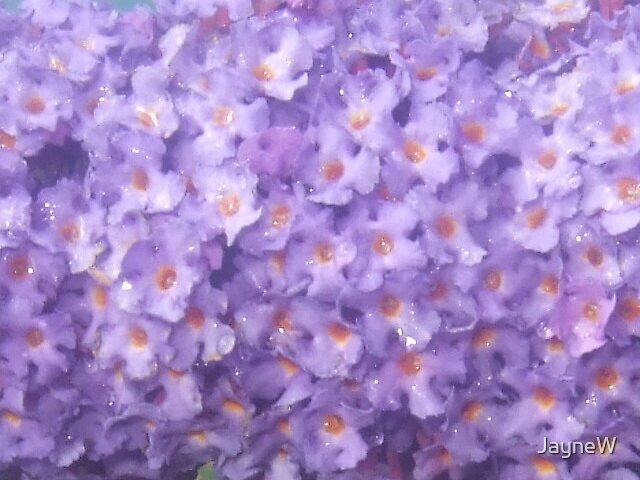 purple flowers by JayneW