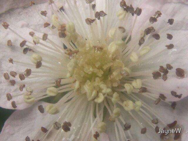 white flower 2 by JayneW